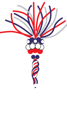 parade-balloons-lg-spinner-2